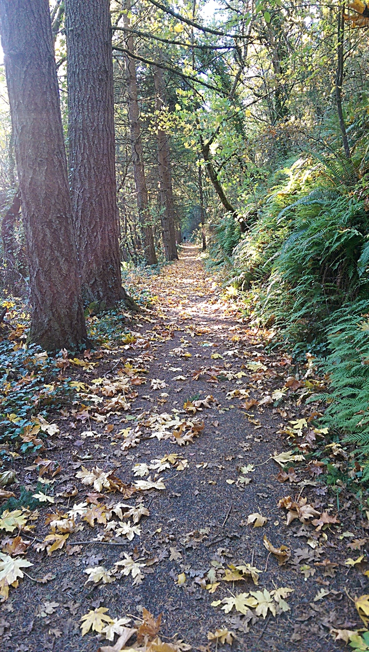 Iron Mountain Trail - Photo by Joy Dazey 750x1326